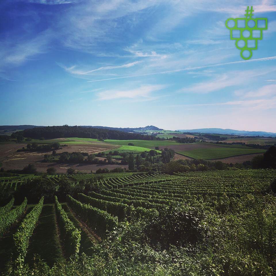 Was für ein Ausblick. #weinberge #grossumstadt #winzerfest #wein #odenwald #hessen #view